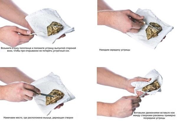 группа объединяет как открывать устрицы в домашних условиях Книга памяти Приморского