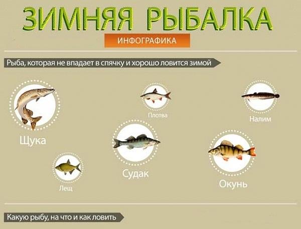 инфографика рыбалка