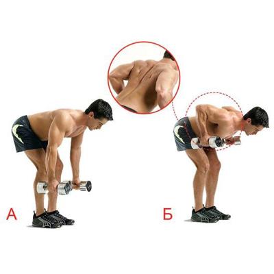 Тренировки с гантелями для спины для мужчин
