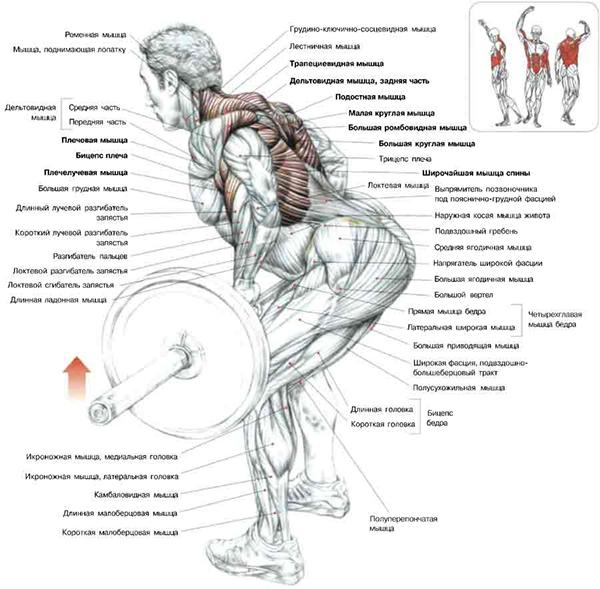 Мышцы кора в домашних условиях