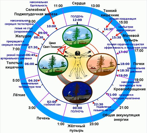 Биологическая Программа Человека