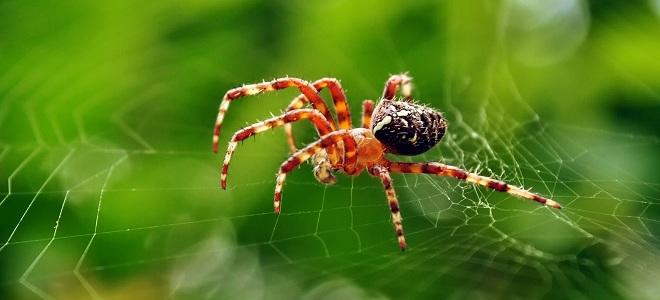 Любопытные факты о пауках