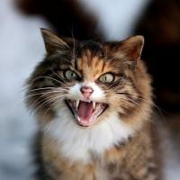 Чем успокоить кота который орет