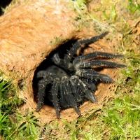 боязнь насекомых фобия