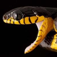 боязнь змей