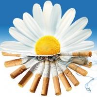 профилактика табакокурения