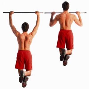 программа тренировок на спину