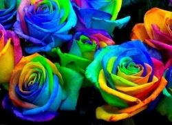 Что обозначают цвета роз.