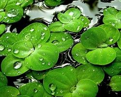 Психология зеленого цвета